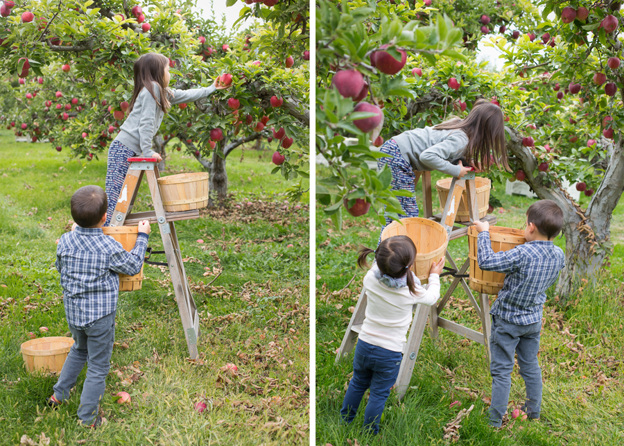 Apple Picking Photography 1