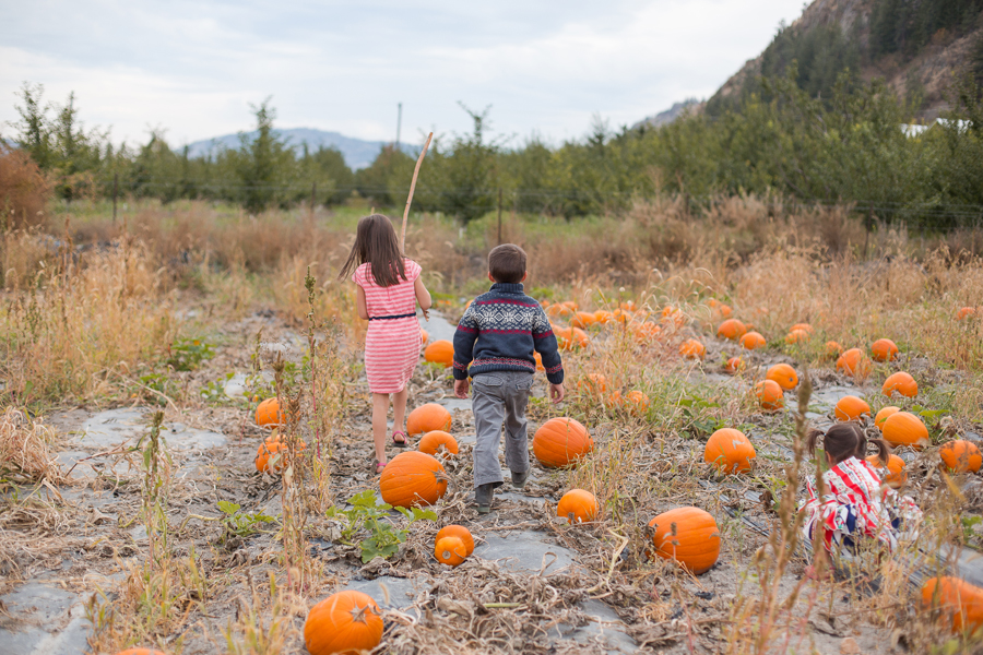 Oliver BC Pumpkin Patch 10